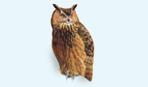icon_owl